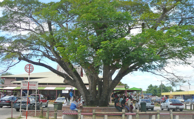 A54 H-10283 Market and Tree