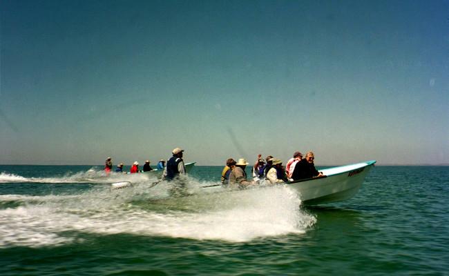 BajaWhales2005-05