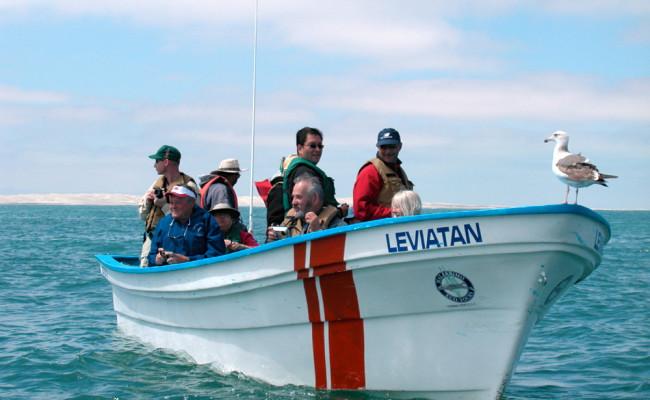 BajaWhales2005-14