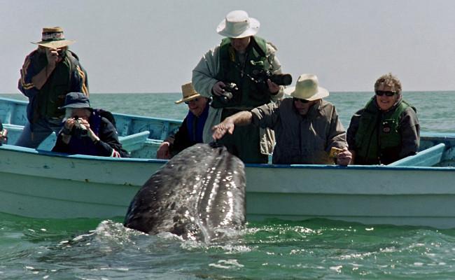 BajaWhales2005-16
