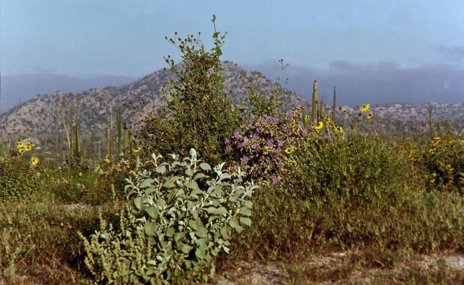 BajaWhales2005-26