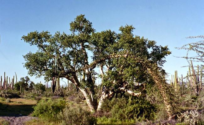 BajaWhales2005-30