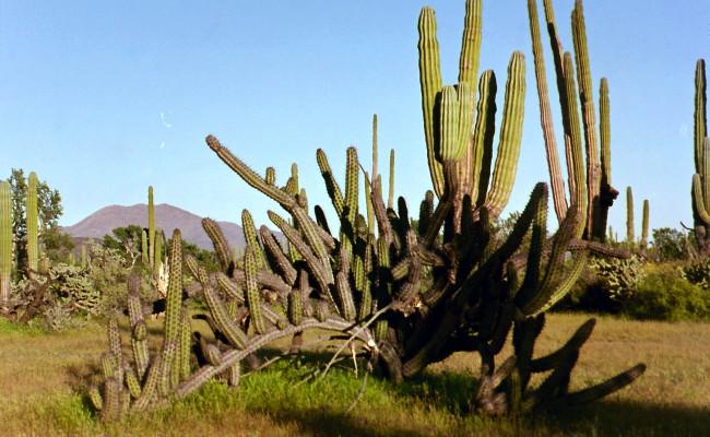 BajaWhales2005-34