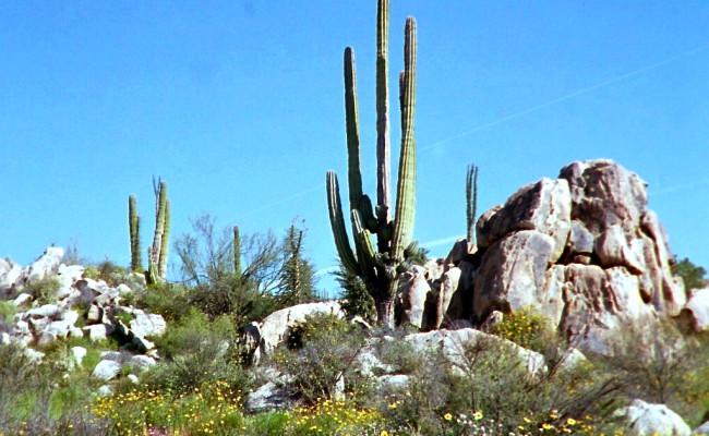 BajaWhales2005-35