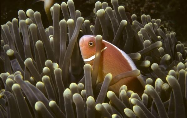 Borneo 1992 Diving