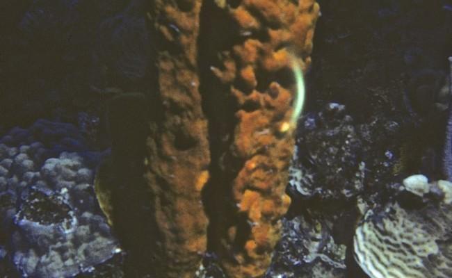 Then:  Barrel and vase sponges were magnificent