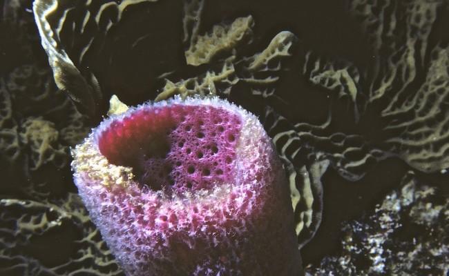 Then:  A beautiful pink vase sponge