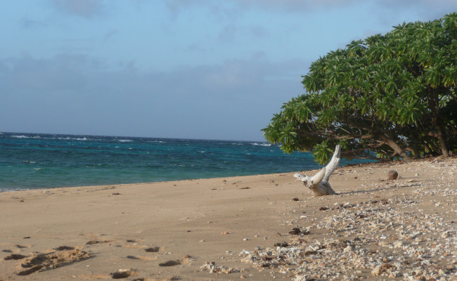 I07 H-669 Beach with Driftwood