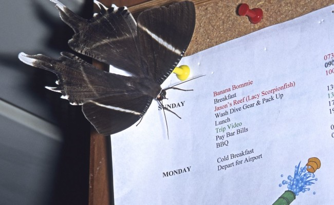 A visiting butterfly checked out our schedule for the last two days