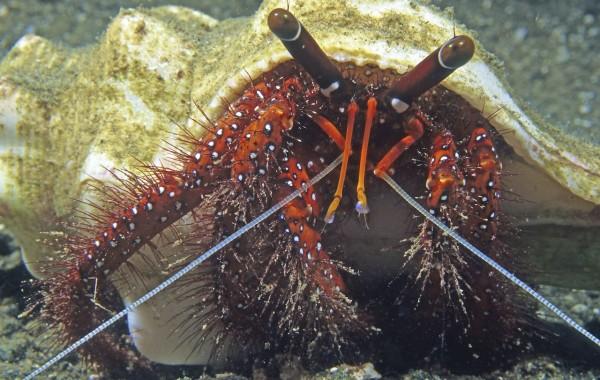 Papua New Guinea 2000 Diving