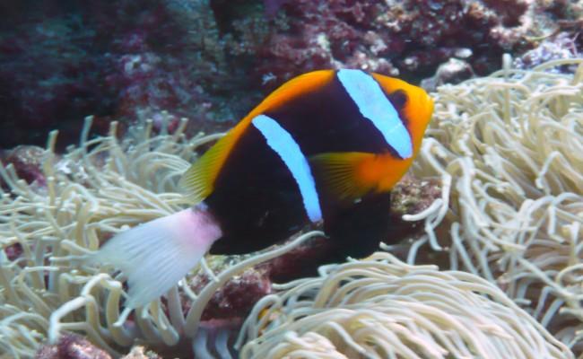 Sol-2010-DT41