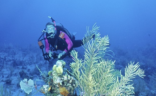 Judy inspects a small coral garden