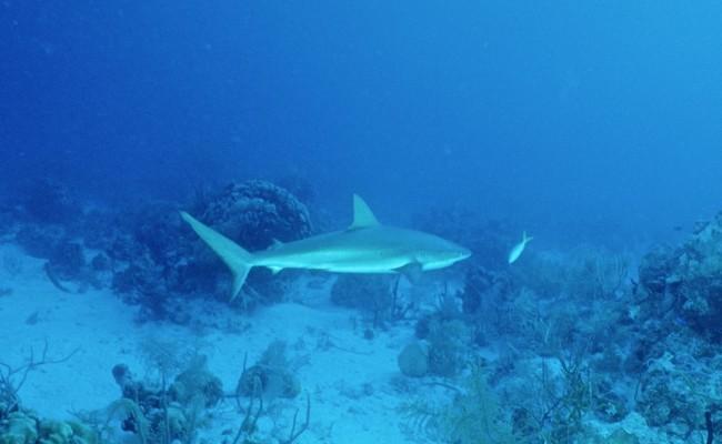 TCA-II 2006 Diving09