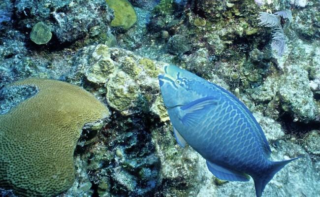 TCA-II 2006 Diving11