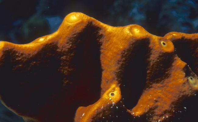A brown sponge closeup
