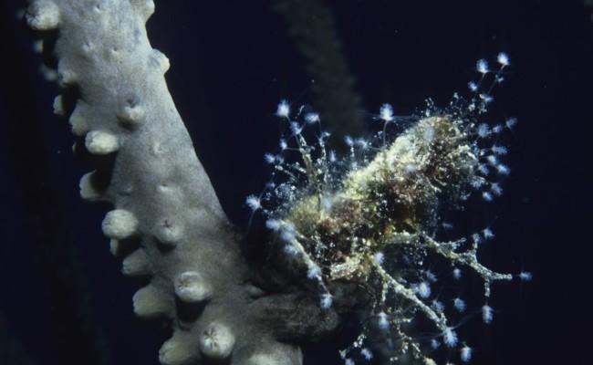 TCA-II 2006 Diving26