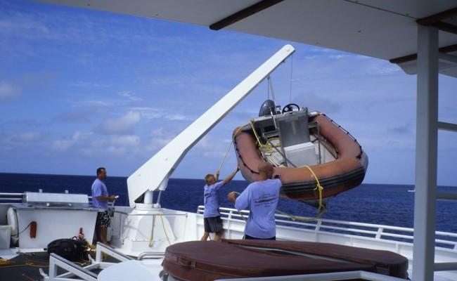 TCA-II 2006 Whales04