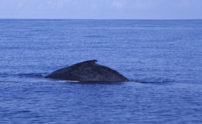 TCA-II 2006 Whales06