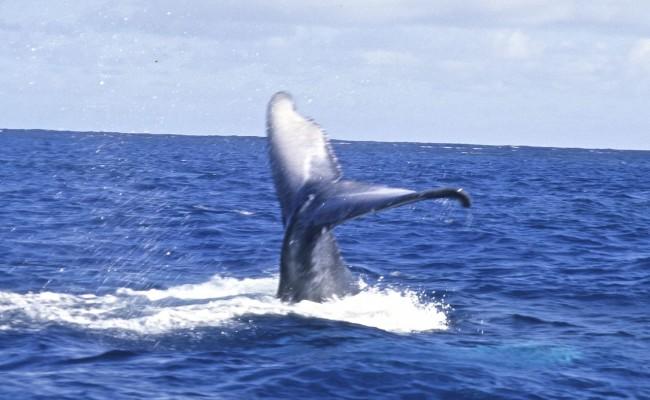 TCA-II 2006 Whales07