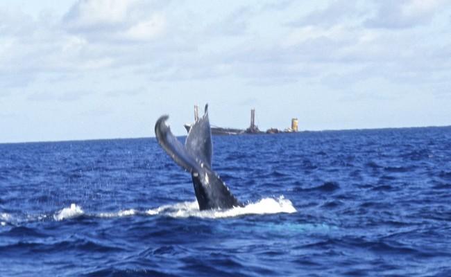 TCA-II 2006 Whales08