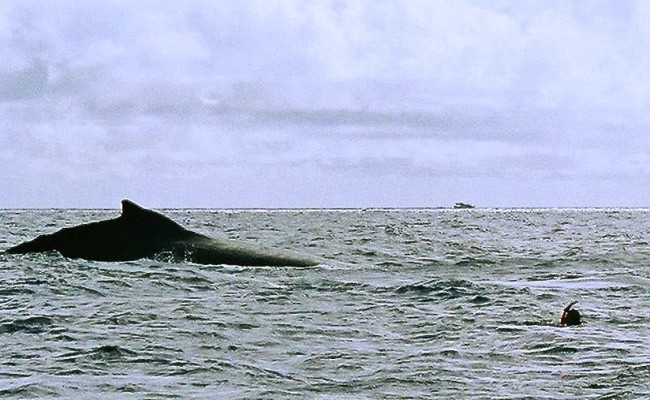 TCA-II 2006 Whales16