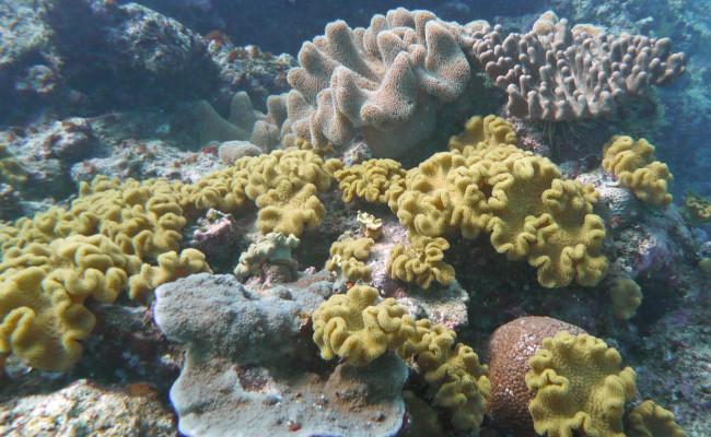 U30 H-598 Coral Garden