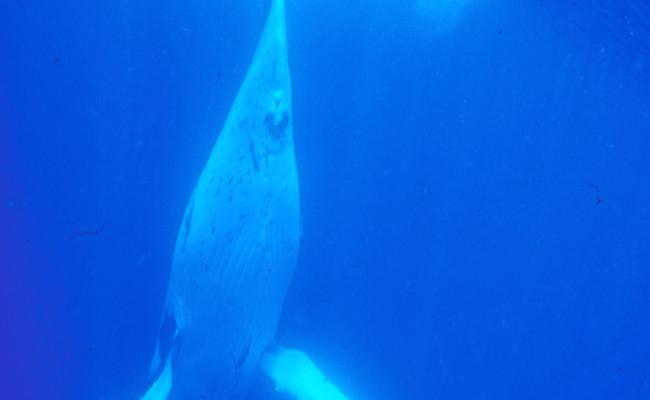 WU15 FW-14 Diving
