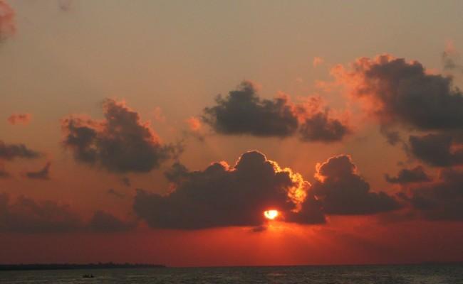 Wakatobi Pelagian15